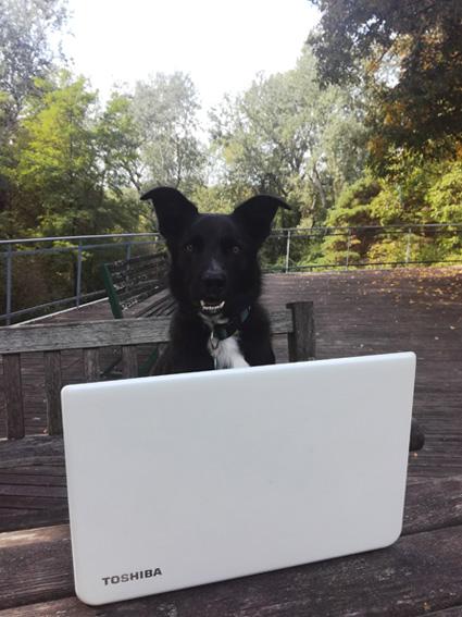 Lucky rédige son article