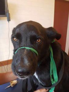 Vétérinaire pauvre Lucky